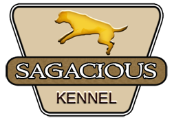Sagacious Kennel